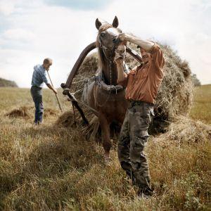 Tadas-Kazakevicius-TKN-arklys